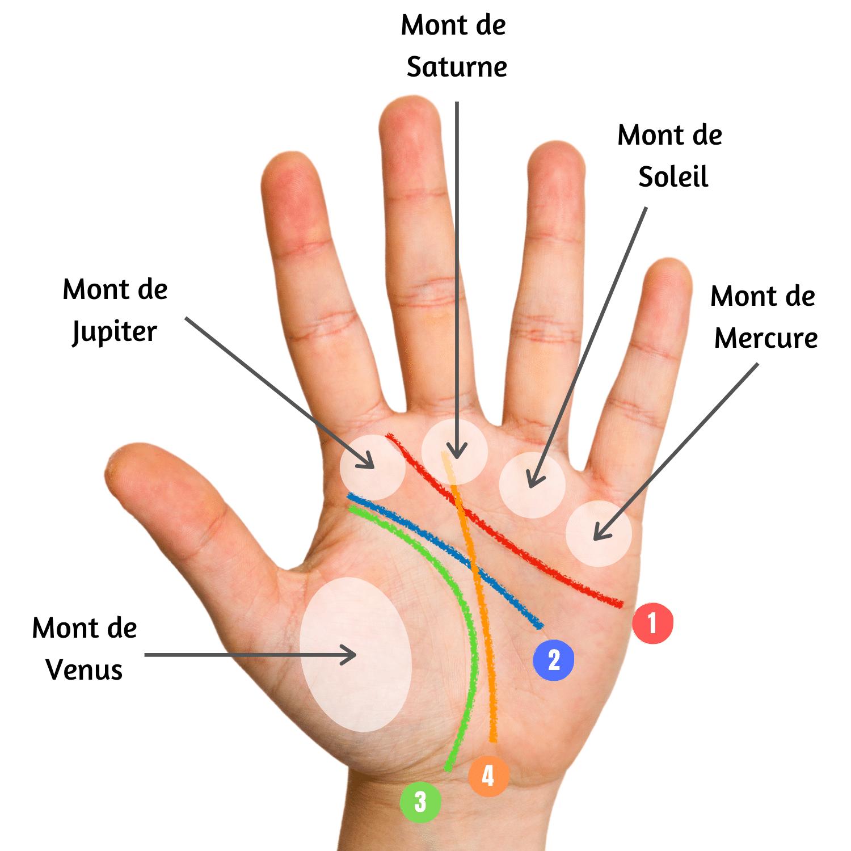 explication des lignes de la main