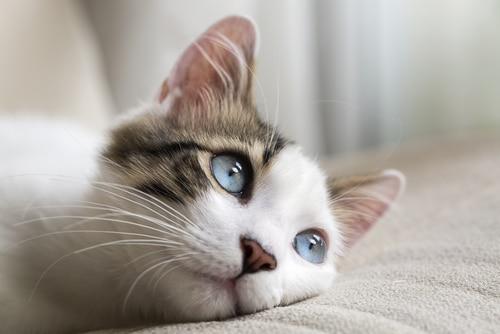 animal totem chat